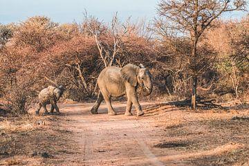 Olifant met jong in Marakele Nationaal Park in Zuid-Afrika van Expeditie Aardbol