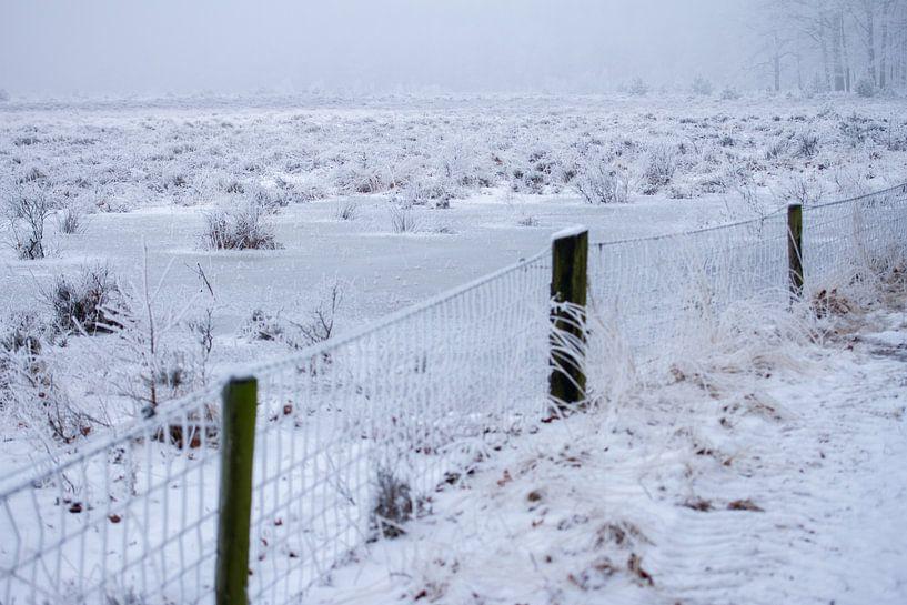 heideveld in de winter van Karijn | Fine art Natuur en Reis Fotografie