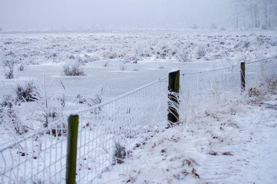 heideveld in de winter