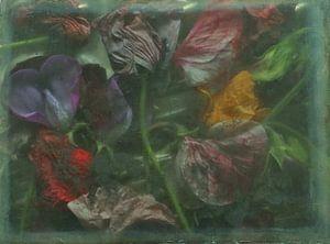 Lathyrus. von Marianne de Wit-Koenen