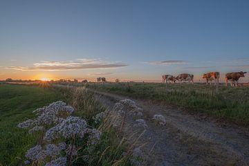 Koeien op de dijk van Moetwil en van Dijk - Fotografie