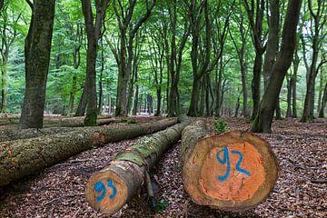 Bosbouw von Marc Arts