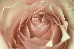 roos van