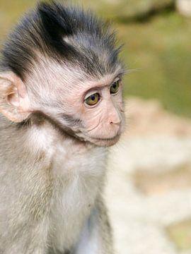 Baby aapje in Bali van