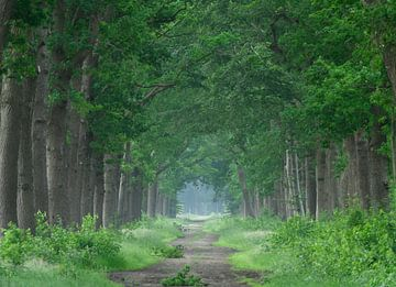 De statige bomen langs de van Michel Knikker