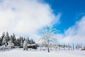 Winter im Riesengebirge bei Spindlermühle, Tschechien von Rico Ködder