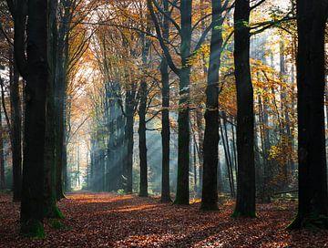 Sonnenstrahlen durch die Bäume von Maureen Materman