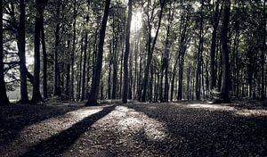 Zon door de bomen van