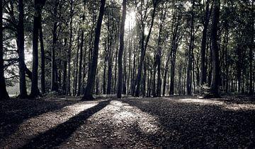 Sonne scheint durch die Bäume von Art