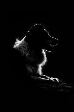 border collie dog fine art sur Kim van Beveren