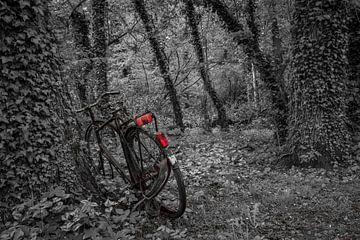 Baum trifft Fahrrad von Mario Brussé Fotografie