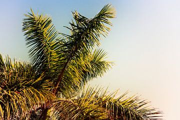 Palmboom in Nerja (Spanje) van Aron van Oort