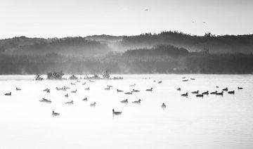 Gänse im Nebel von Pieter Heres
