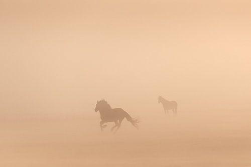 Konikpaarden in de mist op een mooie mistige lente ochtend in het nationaal park Lauwersmeer