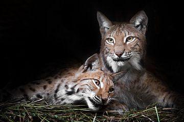 Katze und Kätzchen. ruhig ruhen von Faulheit, aber der Blick ist eine schlaue, dunklen Hintergrund.  von Michael Semenov