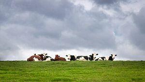 Koeien relaxen in het groene gras onder een bewolkte lucht