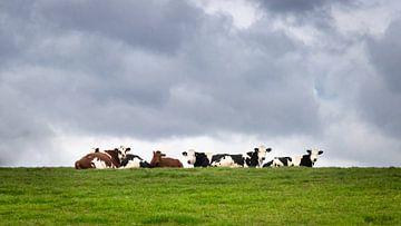 Koeien relaxen in het groene gras onder een bewolkte lucht van Michel Seelen