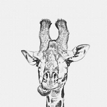 Giraffe van Felix Brönnimann