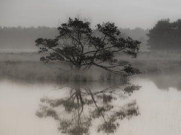 Haarfollikel von Einzelbäumen von Jeroen te Lindert