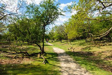 Lente in het bos van Joke Beers-Blom