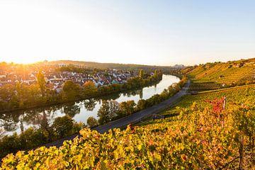 Wijngaarden aan de Neckar in Stuttgart van Werner Dieterich