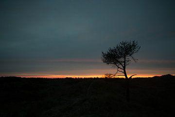 Alleenstaande boom in het duin bij zonsondergang van Arjan Groot