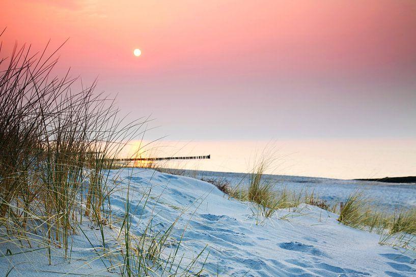 Gras in den Dünen am Meer von Frank Herrmann