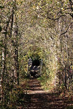 Bos van Ines Thun