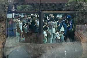 Aapjes kijken in de Japanse dierentuin. Reuzen panda verblijf van