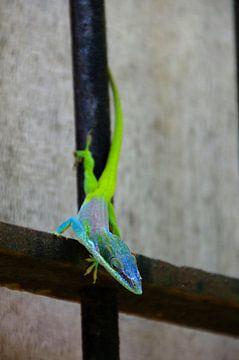 Chameleon? von