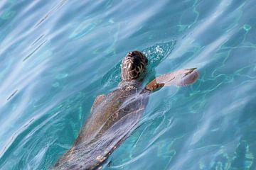 Turtle van Barry Boekhout