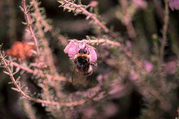 Biene auf Blume von Danielle Vdm