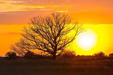 Sonnenuntergang Kampina von Anton de Zeeuw