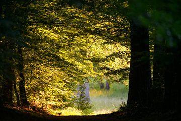 Zonlicht door de bladeren op een bospad in de zomer van Sjoerd van der Wal