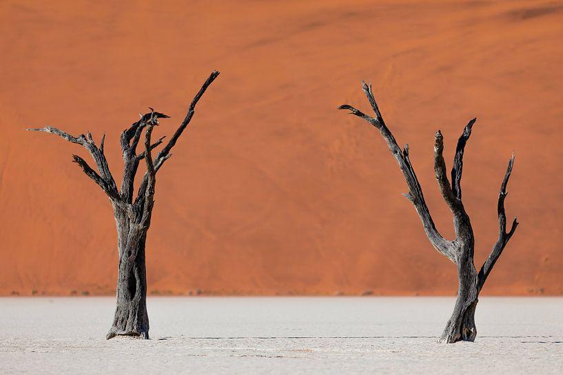 Twee dode bomen voor rode zandduinen in de Dodevlei / Sossusvlei, Namibië van Martijn Smeets