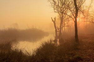 Mistige morgen in oranje