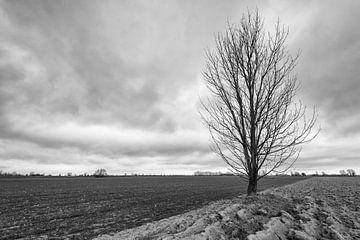 Silhouet van een kale boom solitair in het veld van Ruud Morijn
