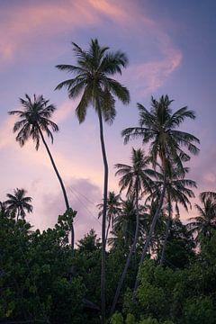 Lila Himmel mit Palmen von Michiel Dros