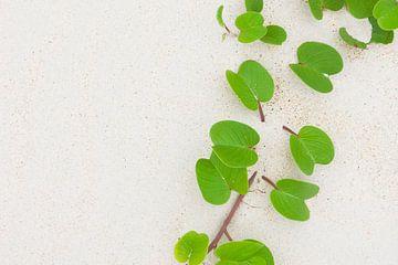 Grüne Blätter auf dem weißen Sand einer tropischen Insel von Melissa Peltenburg