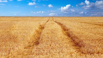 Getreidefeld von BVpix