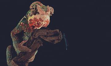 Caméléon avec libellule sur branche sur