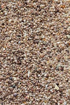 Muscheln am Strand von