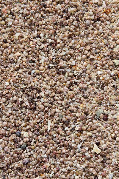 Muscheln am Strand von Levent Weber
