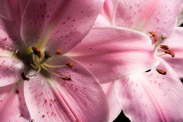 Twee bloemen (lelies) van Shadia Bellafkih