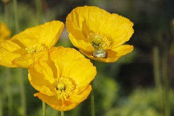 Voorjaarsbloemen van Inge Teunissen