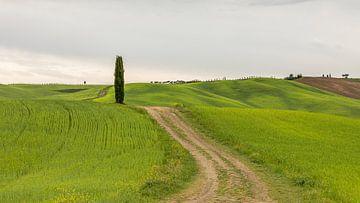 Toscane van Gonda van Wijk