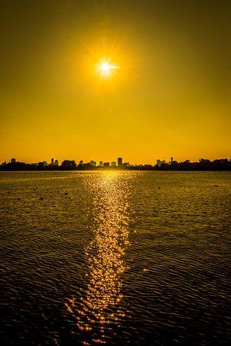 Yellow Rotterdam van
