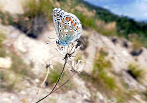 Vlinder van Daphne Photography