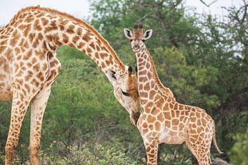 Moeder giraf knuffelt haar kind van Simone Janssen