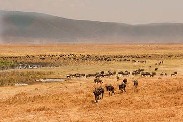 Tanzania Ngorongoro Crater von Andrea Gulickx